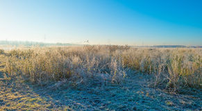 Path through a frozen field at sunrise Stock Images