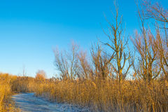 Path through a frozen field at sunrise Royalty Free Stock Image