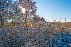 Path through a frozen field at sunrise Stock Photos