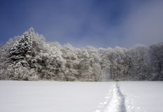 The Path into the Frozen Forest Royalty Free Stock Photo