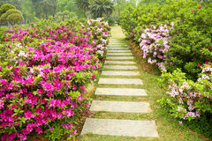 A path full of azaleas Royalty Free Stock Photos