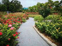 A path fulled of flowers stock photos