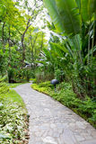 Path and garden Royalty Free Stock Photography