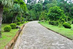 The path in the garden Royalty Free Stock Image