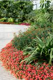 Path in the garden. Flowers and stone path in the garden Stock Photography