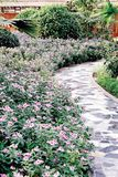 Path in the garden. Flowers and stone path in the garden Royalty Free Stock Photo