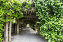 Path Through Garden Arbor. With Grapevines Stock Images