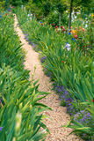 Path in the garden Royalty Free Stock Images
