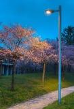 Cherry Blossom Garden II Royalty Free Stock Image