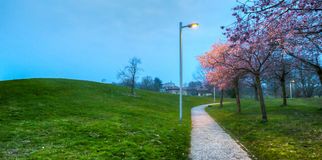 Cherry Blossom Garden III Stock Photo