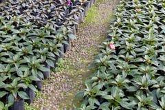 Path in the garden Royalty Free Stock Photos