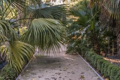 Path in a garden with palm trees. Path in a garden cut by palm leaves Royalty Free Stock Photo