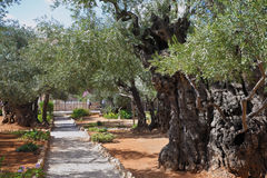 The path in the Garden of Gethsemane royalty free stock photos