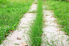 Path in garden Royalty Free Stock Photos