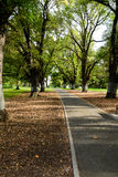 Path in a garden. InQueensland Victoria  Australia Royalty Free Stock Image