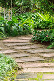 The path in the garden. Stock Image