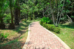 The Path In The Garden. Landscaping in the garden. The path in the garden Royalty Free Stock Photo