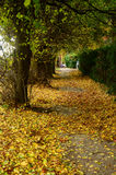Path in a garden. Melbourne Victoria in fall Stock Photography