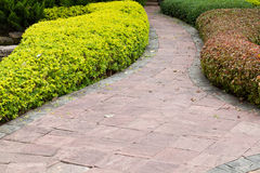 Path in the garden. Stock Images