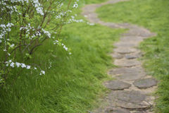 Path in Garden Royalty Free Stock Photography