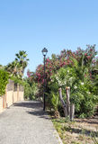 Path in a garden with palm trees Stock Photos