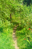 Path in garden. Path in the summer garden Stock Image