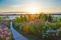 The path of garden sunset Stock Images
