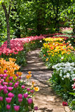 Path in a garden among tulips stock images