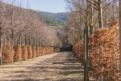 Path in the gardens of the royal palace La Granja de San Ildefon. So on a winter day. Segovia Spain Royalty Free Stock Photography