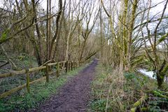 Path at Gathurst Royalty Free Stock Photography