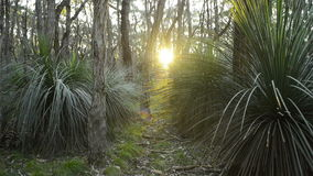 Path Getting Brighter. As the setting sun beams upon it through the woods stock footage