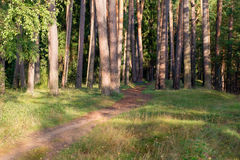 The path goes into the forest Royalty Free Stock Image