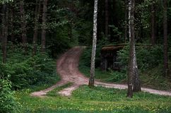The path goes into a green forest. Nature Royalty Free Stock Image