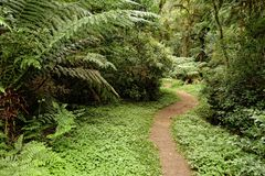 A path goes through a typical brazilian sub tropical wood. A giant fern can be seen on the left, while the floor is full of smaller ferns and other foliage Royalty Free Stock Photography