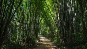 A forest tunnel made of bamboo trees in Thailand royalty free stock photography