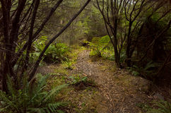 Path Going Through Thick Shrubbery in the Australian bush Stock Photography