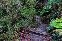 Path Going Through Thick shrubbery in the Australian bush. Walking path in thick, lush, green vegetation in the Australian bush. Hiking trail on mountain royalty free stock images