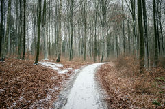 Path going through winter forest Royalty Free Stock Image