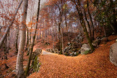 A path of golden autumn leaves and bridge in a forest in Corsica Stock Image