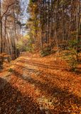 A path of golden autumn leaves in a forest in Corsica Royalty Free Stock Images