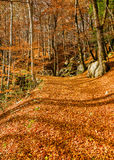 A path of golden autumn leaves in a forest in Corsica Stock Photo