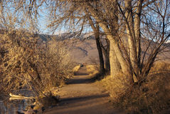 Path in Golden Morning Light Stock Images
