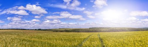 Path through Golden wheat field, perfect blue sky. majestic rural landscape. stock photography