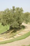 Path of golf course Royalty Free Stock Image