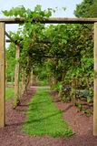 Path in Grape Arbor Stock Image