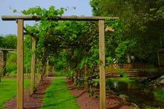 Path in Grape Arbor. A grassy path through grape vine arbor Stock Photos