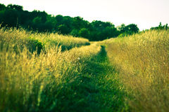 Path in grass Stock Images