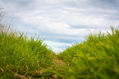 A path through the grass Royalty Free Stock Photography