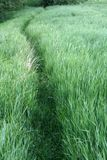 Path through the grass. Path through the green grass Royalty Free Stock Photography
