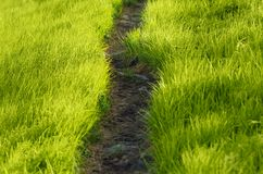 Path in the grass Stock Photos